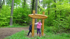Biste du Sepy (Wood Sepy) Piste Vita (Fitness Trail) in Cossonay