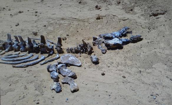 Fossilized Crocodile