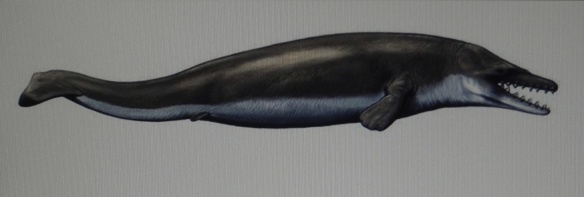Figure of imagination of the Dorudon atrox, ancient whale
