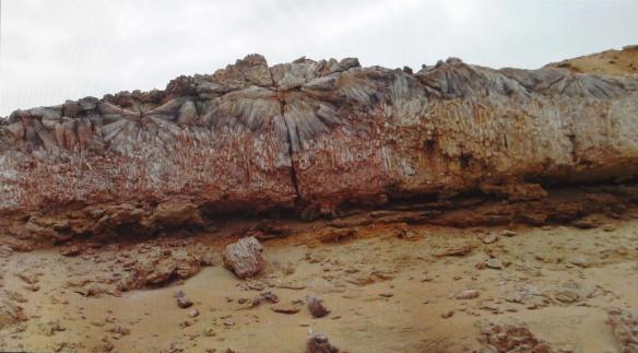Burrows of wood-digesting teredo (marine bivalve)