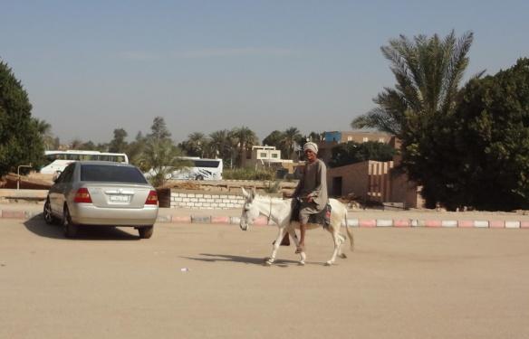 Donkey of Abydos