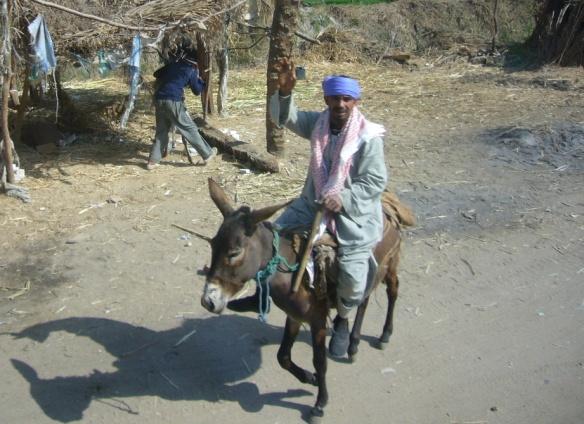 Enjoy a donkey ride
