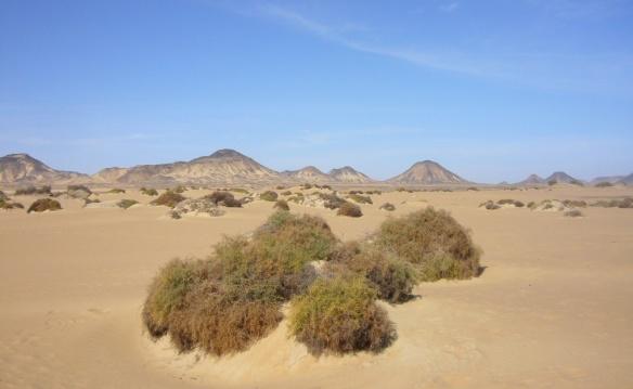 Scenery of the Al-Haiz Oasis.