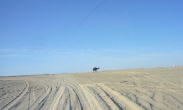 Going to Qasr El-Farafra