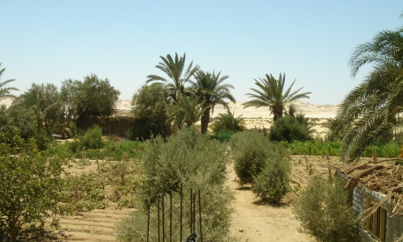 Village of Wadi El Rayan