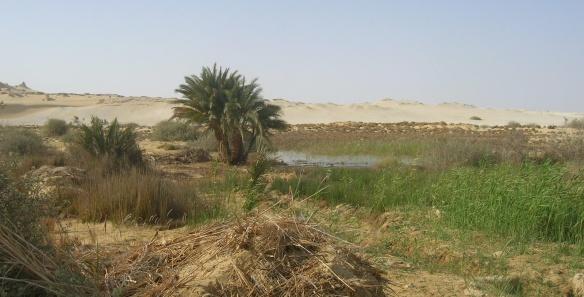 Spring of Wadi El Rayan