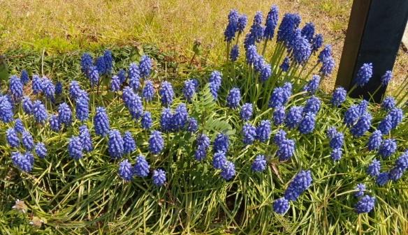 Armenian wild flowers