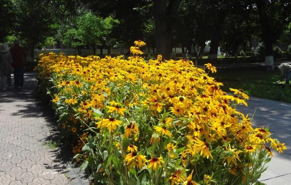 Armenian flowers