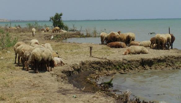 Landscape of Caspian coast, Qobustan