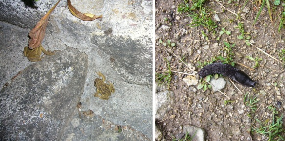 Two frogs and a slug in Pyrenees