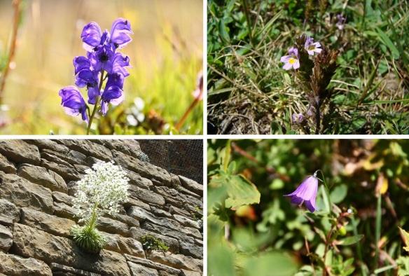 Wild flowers in Pyrenees