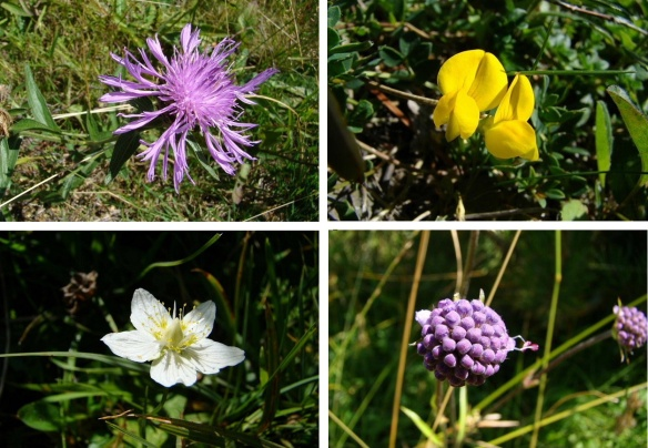 Wild flowers in Pyrenees