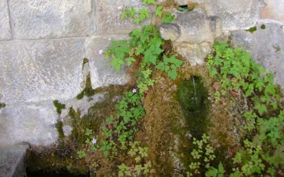 Found this small spring near the Cloister.