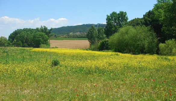 A field between Obanos and Puente la Reina from.