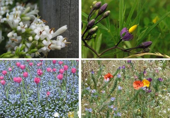 Flowers from Navarre, Pyrenees Spain