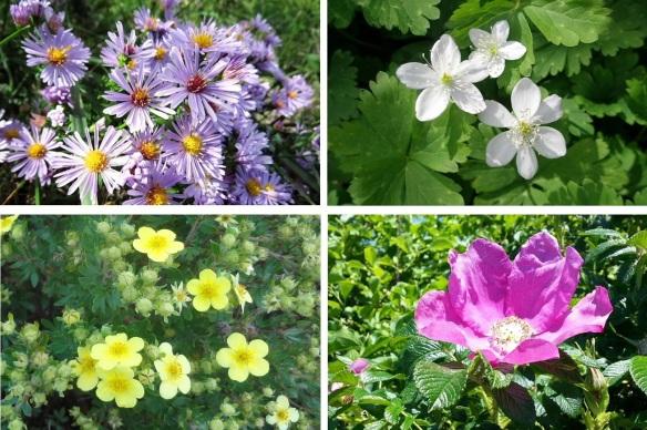 Flowers from the Wakkanai Park.