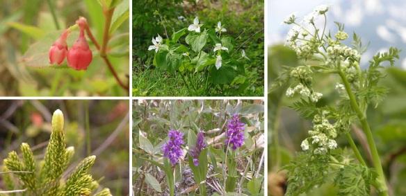 Rare flowers from Minami-hama Marshland (South Beach Marshland)