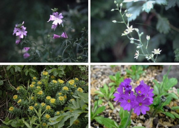 Wild flowers near Peach Rock.