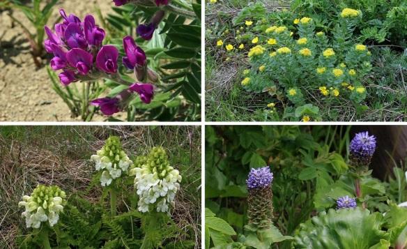 Flowers around Motochi Coast