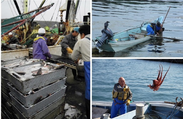 Landing and sorting of fish. Sea urchin fishing and octopus fishing.