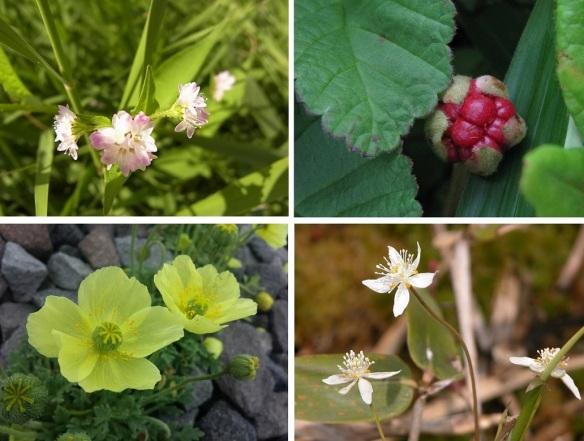 Flor of the Marshland