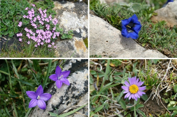 Wild flowers of Picos de Europa