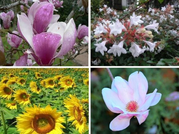 Flowers from Sahagun region