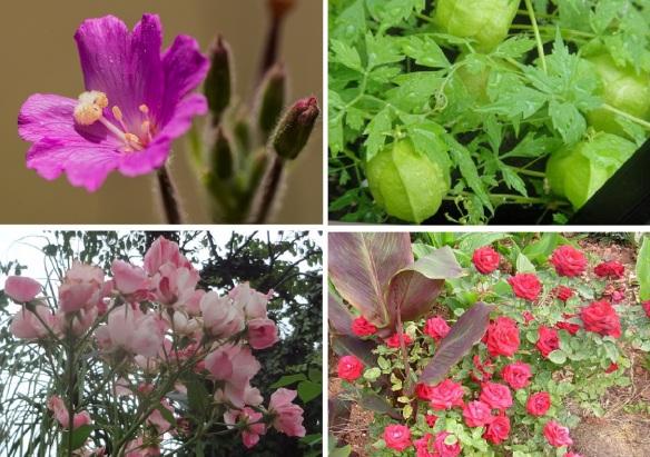 Flowers from Frómista