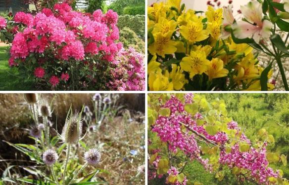 Flowers around León