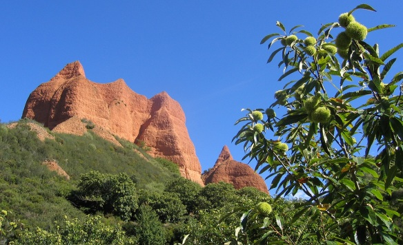 The most of trees growing in Las Médulas are chestnuts.