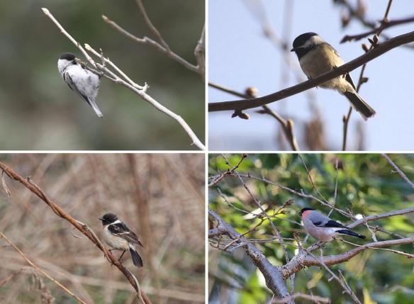 Wild Little Birds in the Park