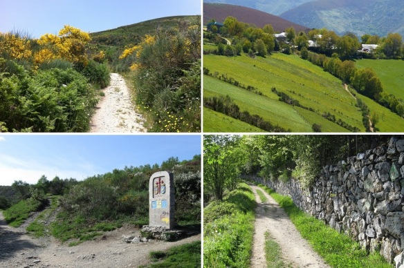 Landscape, from Vega de Valcarce to O Cebreiro; Mountain path of flowers of the genista. Distant view of La Laguna village. Stele, stone monument, Galicia is from here. Pilgrimage path, old people had made.