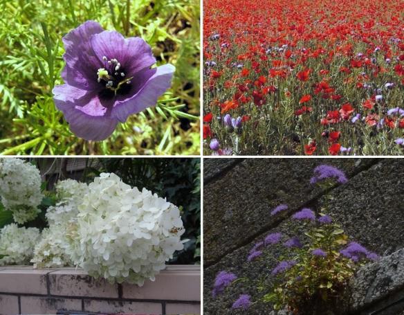 Flowers found in Santiago de Compostela