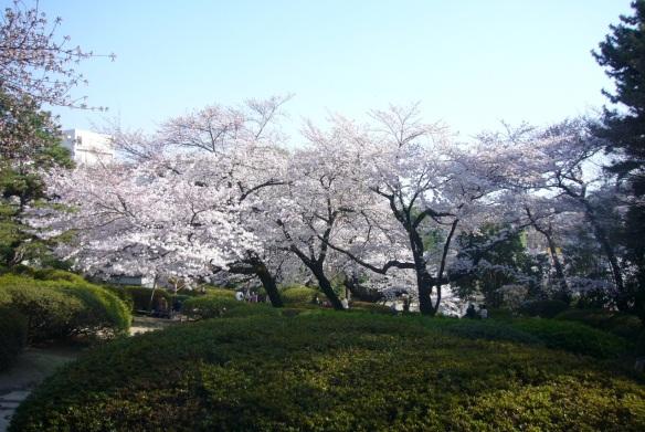 At a park in Nakano-ward Tokyo