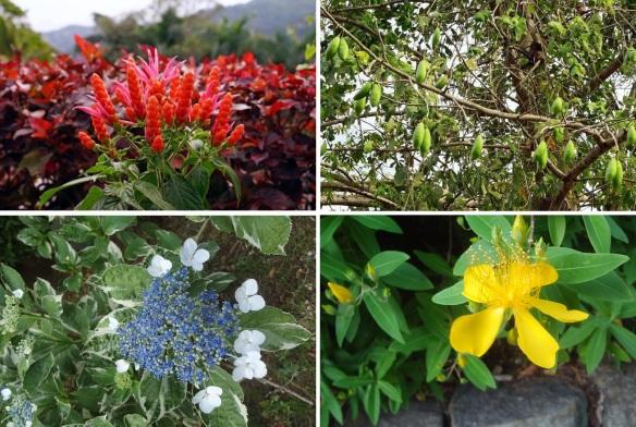 Flora of the Kurunegala Area