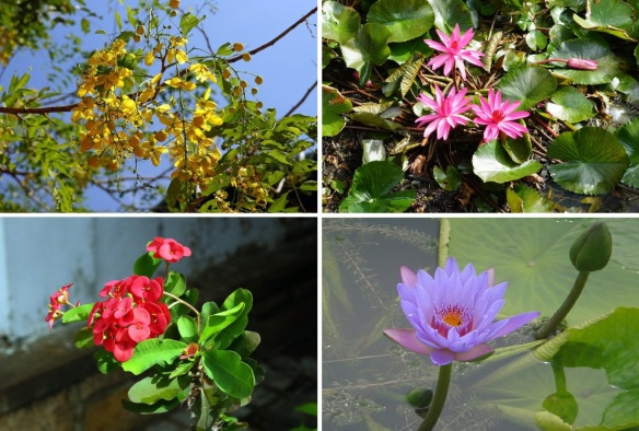 Flowers from the village of Uswetakeiyawa