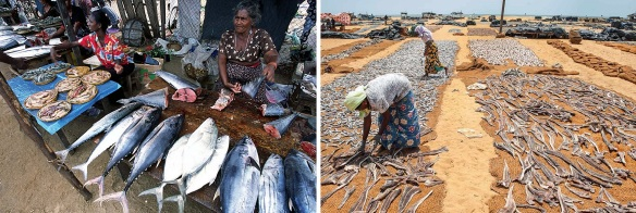 Local women work in Fish market.