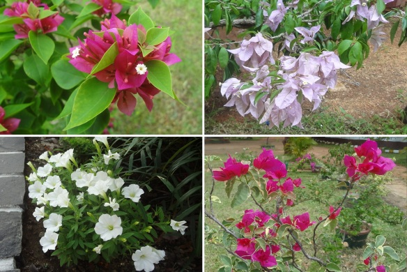 The Platinum Resort has rich flowers on the garden.