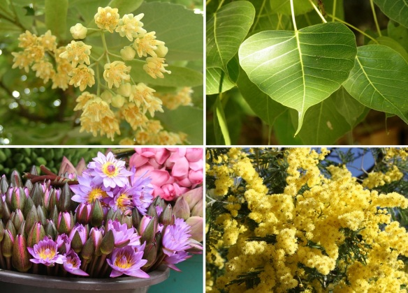 Flora that grows in the yard of Jaya Sri Maha Bodhi Templ; Bodhi tree blossoms and leaves, water lilies and unknown yelow blossoms.