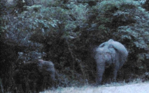 At a distance, a female elephant with baby on a stream