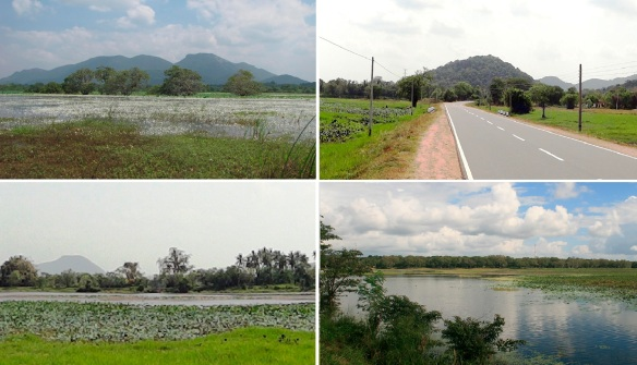 The scenery on the way from Anuradhapura to Polonnaruwa.