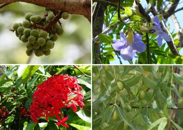 Flora of Sigiriya