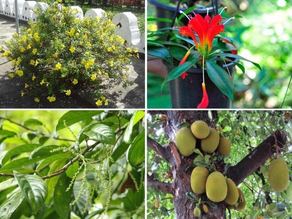 Flora of Dambulla Rajamaha Viharaya