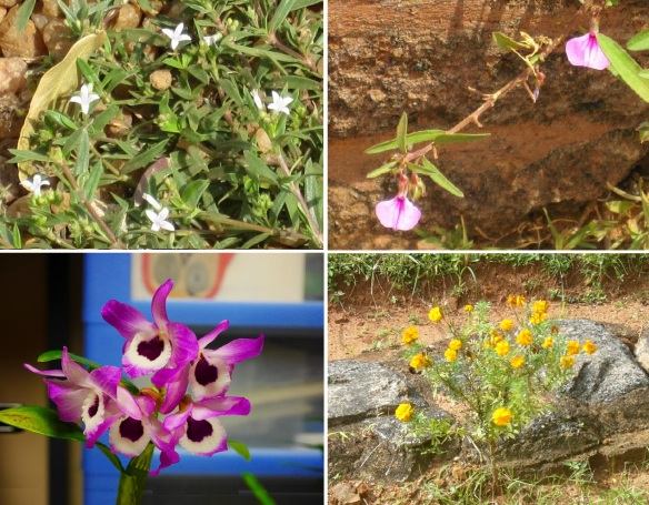 Flowers from the Sigiriya Rock Palace