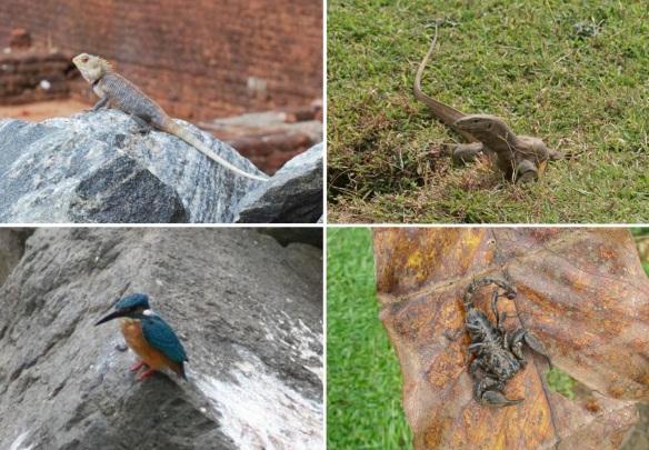 Faona from the Sigiriya Rock ruins; Chameleon, lizard, king-fisher and scorpion