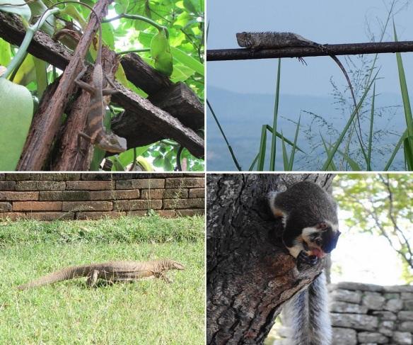 Fauna of Matale