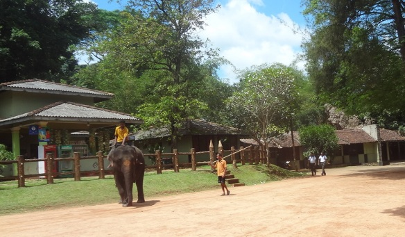 Internal Land of Pinnawala Elephant Orphanage