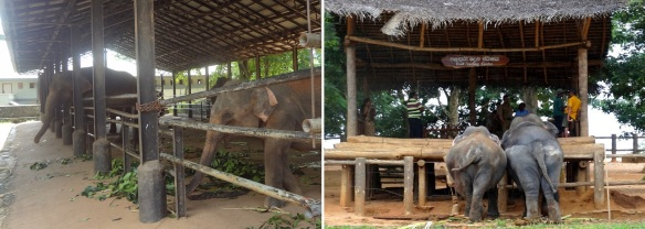 The orphanage was established to feed, nurse and house young elephants found abandoned by their mothers.