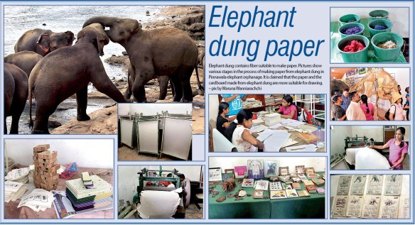Brochure of Elephant Dung Paper