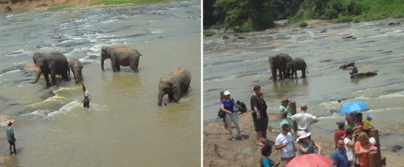 Elephants and tourists are enjoying each other.